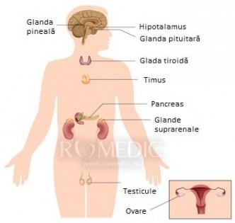 Anatomia organelor sexuale barbatesti
